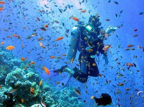 Scuba Diving Holidays Tsy manam-paharoa sy mahaliana