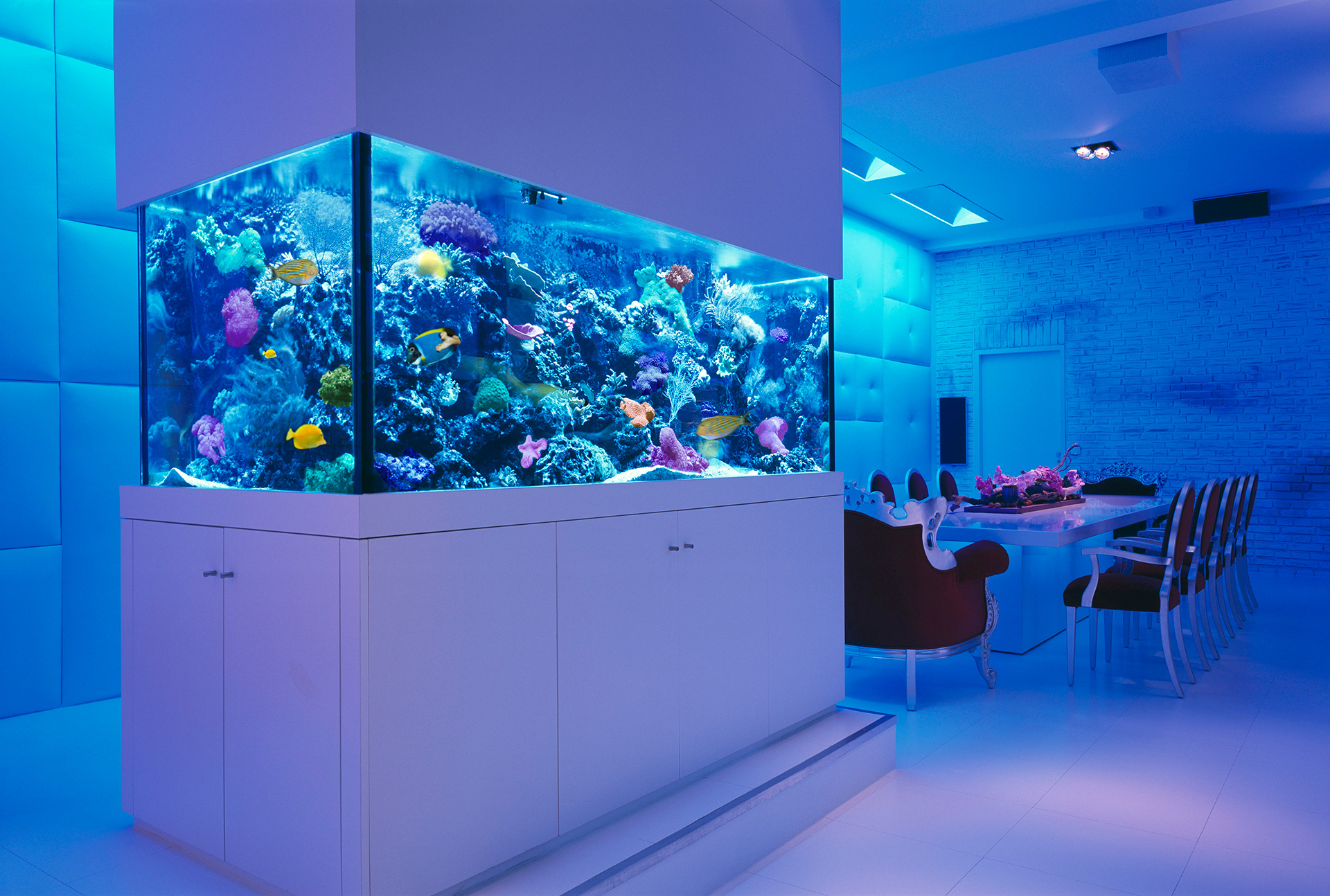 Things You Should Know About Aquarium