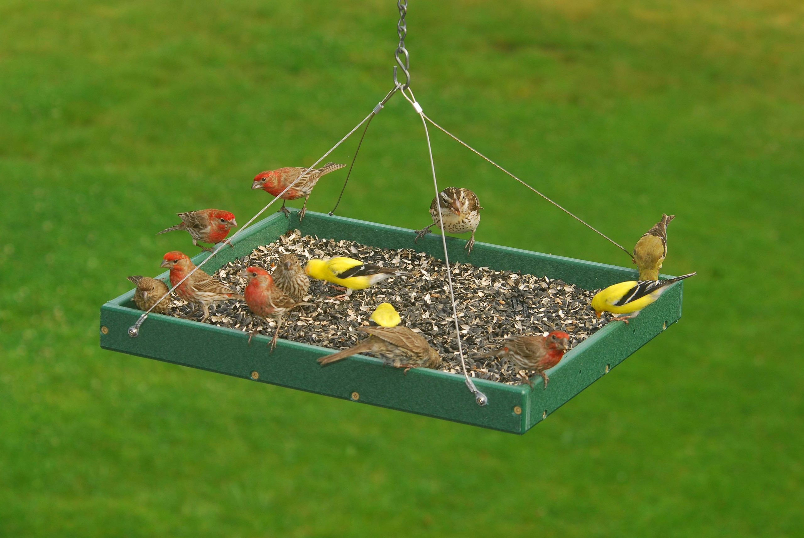 Wild Bird Feeding Guide