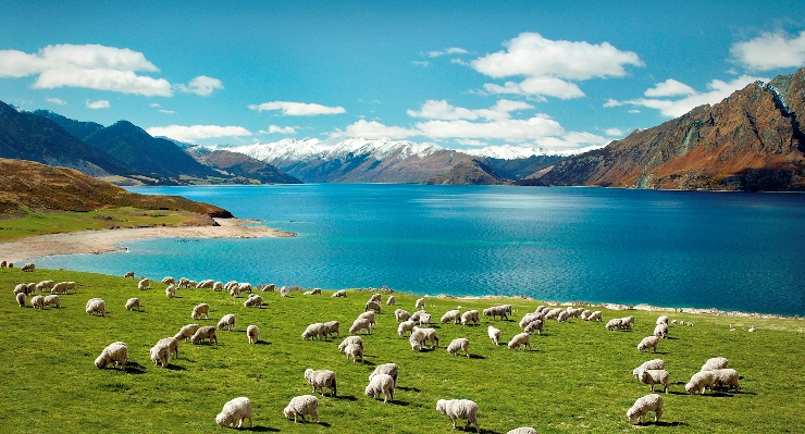 The Dos and Don'ts Of Migrating To New Zealand