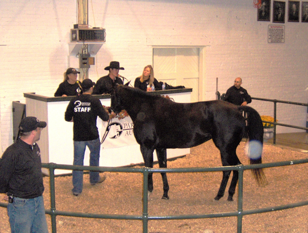 Why You Should Look Into Online Horse Auctions