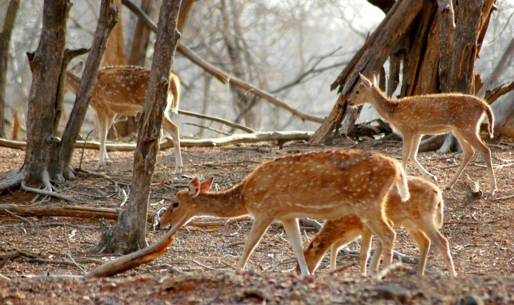 Aravalli Wildlife Sanctuary Mount Abu
