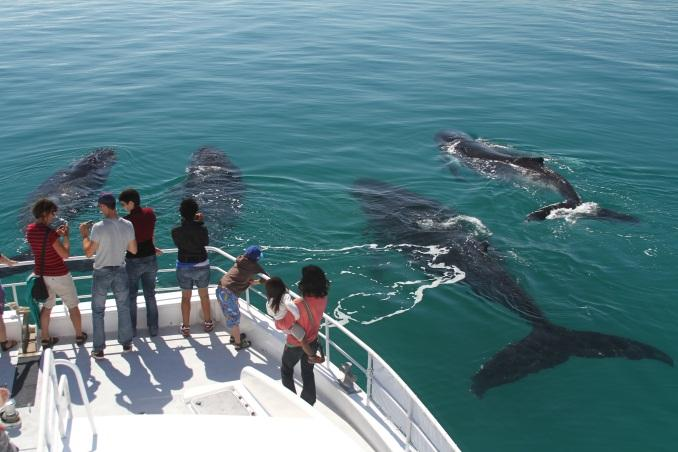 Whale Watch The Right Way This Holiday Season
