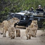 Private Safari Tours In Africa Is The Best Vacation Plan For Wildlife Watching