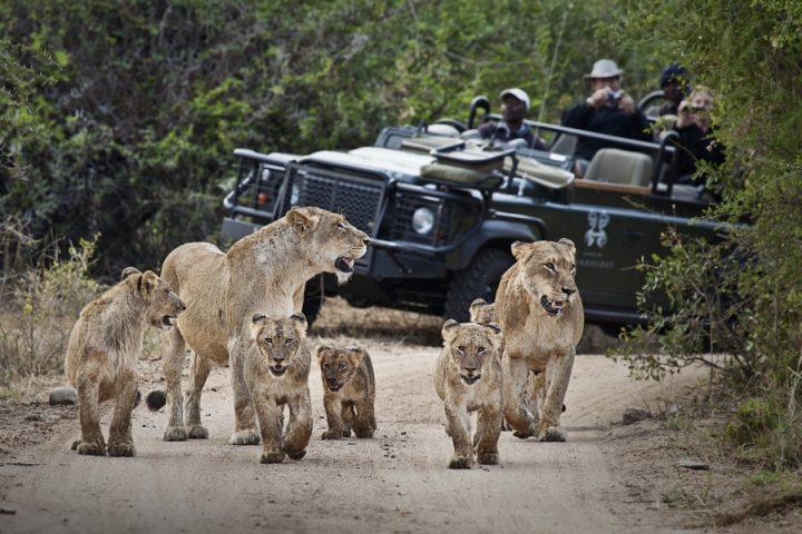 ทัวร์ซาฟารีส่วนตัวในแอฟริกาเป็นแผนการพักผ่อนที่ดีที่สุดสำหรับการชมสัตว์ป่า